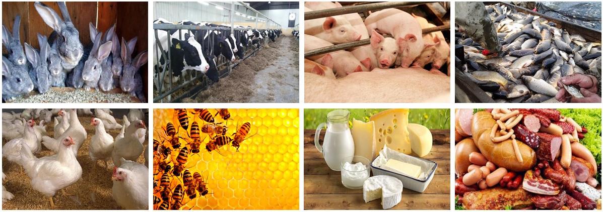 Спеціальність «Технологія виробництва і переробки продукції тваринництва» |  Полтавський державний аграрний університет